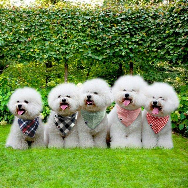 Fashion Plaid Dog's Bandana